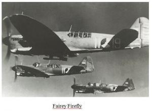 firefly mld